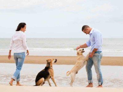Find a Pet-Friendly Town