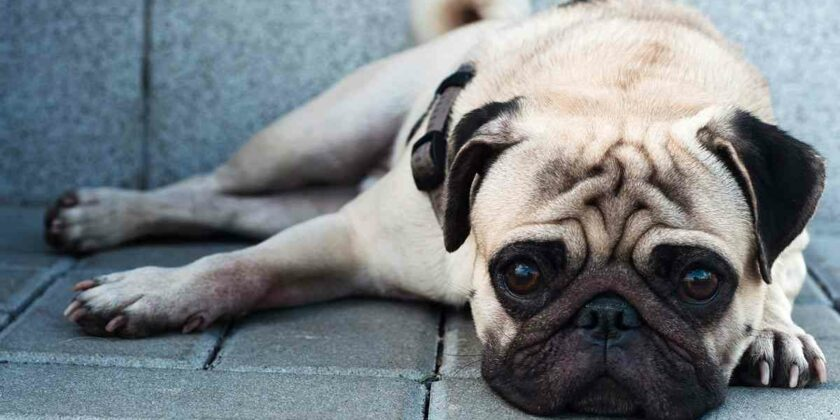 Do Pets Have Allergies?
