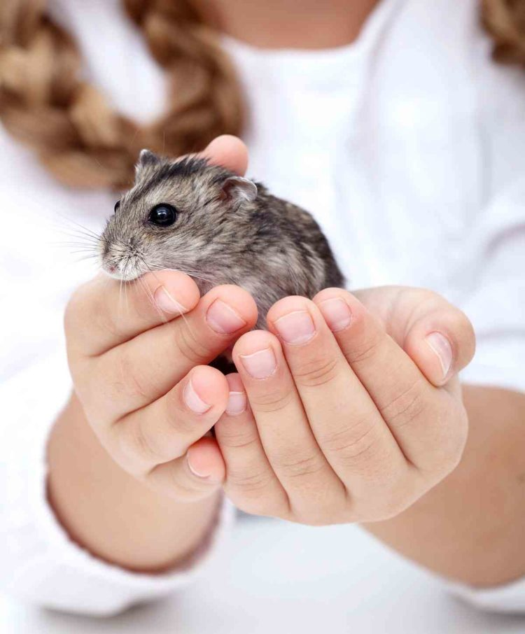 7 Small Pets for You
